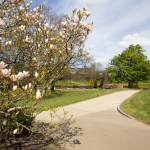 Tunbridge-Wells-magnolia-garden